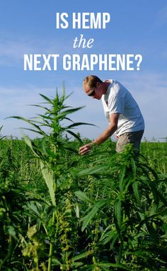 Is Hemp the Next Graphene? Cannabis News, Medical Cannabis, Hemp Recipe, Cannabis Plant, The Next, Funny Animal Pictures, Weed, Organic, Hemp