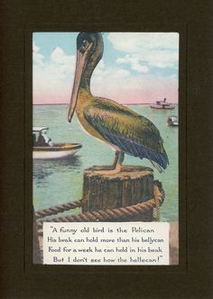 """Reproduced vintage postcards dating back to 1910, displaying quaint phrases or illustrations appropriate for a handful of special events: Card reads """"A funny old bird is the Pelican, His beak can hold"""