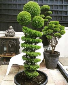Creating a bonsai garden can be a terrific activity for everybody and is both enjoyable and stress eliminating. It can produce a stunning display of bonsai trees that will be taken pleasure in by all of the household Topiary Garden, Topiary Trees, Bonsai Garden, Garden Trees, Garden Hedges, Small Vegetable Gardens, Vegetable Garden For Beginners, Beautiful Flowers Garden, Beautiful Gardens