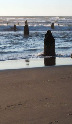 This beach is a graveyard for a ghost forest - Neskowin, Oregon