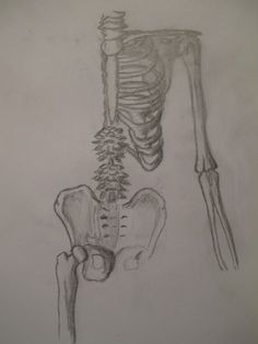 i love anatomy...my friend drew this picture, and it's just so pretty! the body is such a magnificent creation!