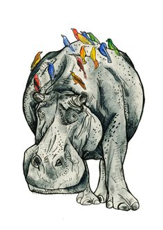 Watercolour hippo illustration print form etsy