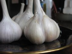Growing garlic from bulbs.