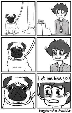 The power of the adorable pug face
