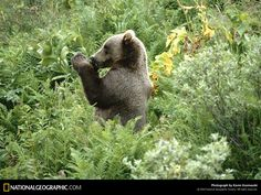 Animales salvajes - Fondos para Móviles: http://wallpapic.es/national-geographic-fotos/animales-salvajes/wallpaper-38606