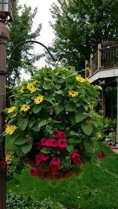 Fake Plants Decor, Hanging Plants, Jardins D'hostas, Garden Beds, Garden Art, Hanging Flower Baskets, Flower Planters, Hosta Gardens, Pot Jardin