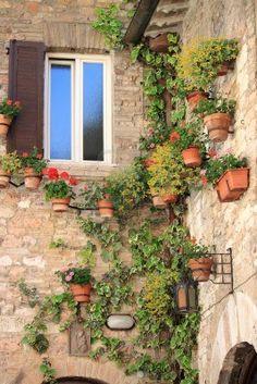 Angolo medievale con fiori e vasi in Assisi, Italia Archivio Fotografico