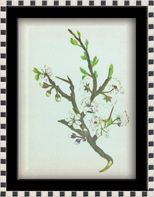 Balandžio 25 diena. Balandžio 25 dienos gėlė, šventės ir vardadieniai. Balandžio 25 dienos darbai sode ir darže.