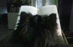 """Attenta lettura di come eliminare il gatto di casa"""""""