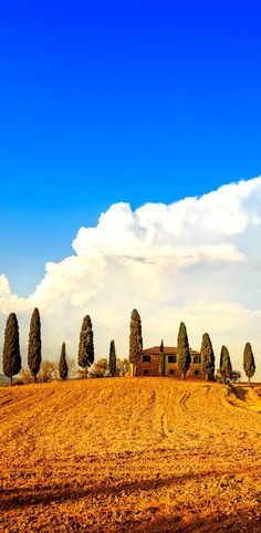 Tuscany, farmland and cypress trees and white road, country landscape. Siena, Val d Orcia, Italy, Europe. | 15 Most Colorful Shots of Italy