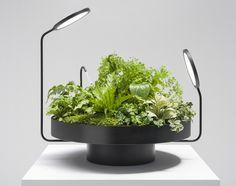 plante d'intérieur peu de lumière viride Duo Goula Figuera Studio
