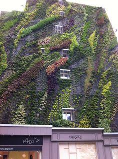 Mur végétal vu rue des Petits Carreaux. Paris.