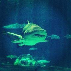 duunnn dunnn... duuuunnnn duun... duuunnnnnnnn dun dun dun dun dun dun dun dun dun dun dunnnnnnnnnnn dunnnn Fun times at #seaworld #sharks. ...