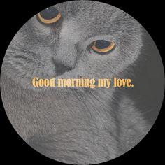 #goodmorning #mylove Good Morning My Love, Movies, Movie Posters, Good Morning Love, Films, Film Poster, Cinema, Movie, Film