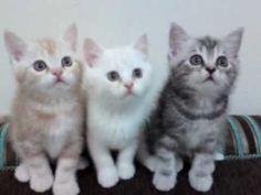 Beat Bopping Kittens!!