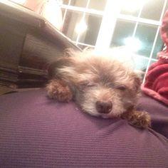 Sleepy Chauncey