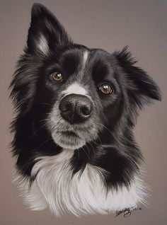 Dog Grooming Shop The 15 Most Realistic Australian Shepherd and Border Collie Paintings.Dog Grooming Shop The 15 Most Realistic Australian Shepherd and Border Collie Paintings Animal Sketches, Art Drawings Sketches, Pet Drawings, Drawing Art, Border Collie Art, Border Collie Puppies, Collie Dog, Color Pencil Art, Colored Pencil Artwork