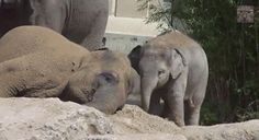 """""""…I'll just leave this right here."""" 