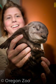 Just Say 'Mo': Oregon Zoo's Baby River Otter Gets A Name