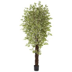 Nearly Natural 5431 Variegated Mini Ficus with 4131 Leaves, 7.5-Feet -- See this great product.
