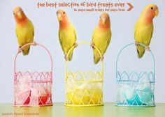 Bird treats and parrot treats add a new dynamic to your bird's nutrition and training program. Bird treats your species loves will increase interest and fun Cockatiel, Parakeets, Parrots, Bird Cages, Bird Toys, Love Birds, Embedded Image Permalink, Happy Easter, Pet Birds