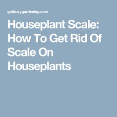 Houseplant Scale: How To Get Rid Of Scale On Houseplants