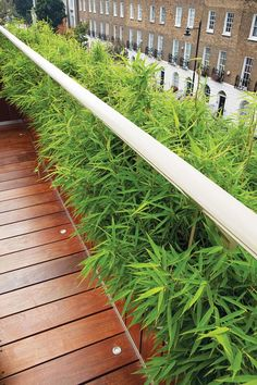 SCREEN IDYLLS  London garden designer Stuart Craine chose a dwarf bamboo that won't grow past the handrail so as not to obscure views of the street below.