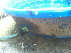 How I Keep Water For My Ducks Clean Great Idea For
