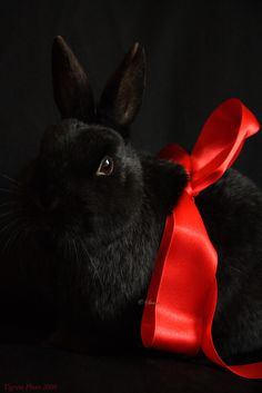 Pretty black bunny with a red bow Black Color Combination, Black Bunny, Foto Pose, World Of Color, Cute Bunny, Bunny Pics, Adorable Bunnies, Poses, Red Ribbon
