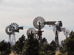 do windmills grow wild???
