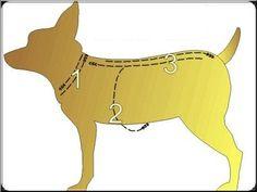 Miniature Pinscher: Mold Dog Clothes