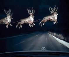 Now this would be a shocker! Watch out for the flying reindeer on Christmas Eve night.