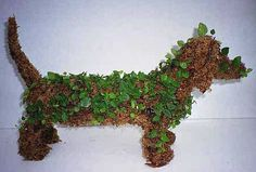 Dachsie with ivy   topiary