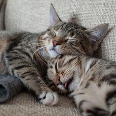 FREE Cat Watch & The Help Feral Cat Project - kitten #cat #funnycats #feralcats #kitten #catcartoons