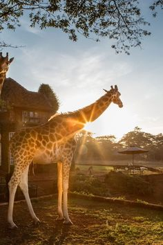 10 Cutest Hotel Animals - Macaws. Giraffes. Lemurs. And Swimming Pigs. We're not talking zoo animals here. These adorable guys call hotels home and are more than willing to show guests a little love. Just don't grow too attached!