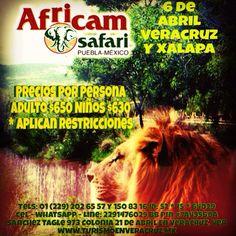 Vamos a #Africam Safari este 6 de #abril  http://www.turismoenveracruz.mx/tag/africam-safari/ #veracruz #xalapa