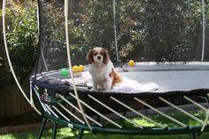 Fun in the sun for dogs too!
