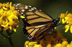 The Incredible Journey of the Butterflies | Free Documentary Online