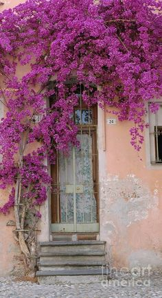 Bouganvilla Doorway Photograph  - Bouganvilla Doorway Fine Art Print