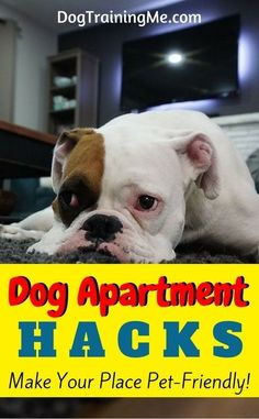 Looking for some hacks for keeping a dog in your apartment? Are you concerned about barking? Does your dog get into things or make a mess? Read the 6 must-know dog apartment tips in our article!