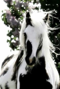 beautiful horse black and white