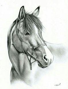 Rysunek ołówkiem - koń
