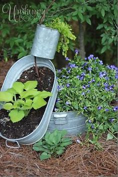 Top Five Shade Loving Plants For Your Garden | eBay