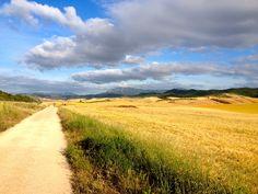 El Camino en Navarra, despues de Villamayor de Monjardín.