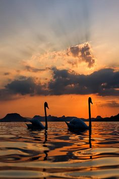 senerii:  (by Péter Bognár) via 500px #sun #birds #orange