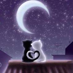 kitty couple under the moon