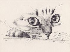 Image result for cat drawing