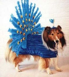 please.....get this off me....i am a lovely sheltie and have my pride...
