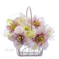 Spring Basket - null