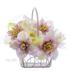 Spring Basket by Jacky Parker